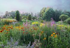Beautiful summer landscape with blooming garden flowers. Rudbeckia and fireweed plants. stock photos