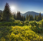 Beautiful summer landscape in the Carpathian mountains. Stock Image
