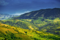 Beautiful summer landscape in Carpathian mountains Stock Images