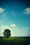 Beautiful summer landscape and the cloudy sky Royalty Free Stock Images