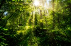 Beautiful summer landscape, dense forest, the sun breaks through the thickets creating beautiful reflections on the. Leaves and grass royalty free stock images