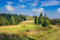 Beautiful summer landscape. stock photo