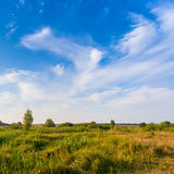 Beautiful summer landscape with field of green grass Royalty Free Stock Image
