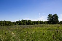 Beautiful summer landscape field with green grass and trees against clear blue sky. Beautiful summer landscape endless field with green grass and trees against a stock images