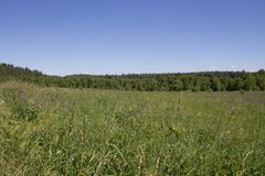 Beautiful summer landscape field with green grass and trees against clear blue sky. Beautiful summer landscape endless field with green grass and trees against a stock photography