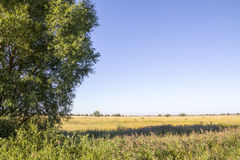 Beautiful summer landscape. With field and tree Royalty Free Stock Photo