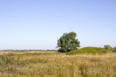 Beautiful summer landscape. With field and tree Royalty Free Stock Image