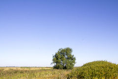 Beautiful summer landscape. With field and tree Royalty Free Stock Images