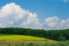 Beautiful summer landscape field of wheat with sky big clouds. Beautiful summer landscape. field of green wheat on a hills with blue sky, big clouds and trees as Royalty Free Stock Images
