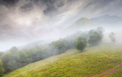 Beautiful summer landscape in the foggy mountains Royalty Free Stock Photo