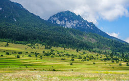 Beautiful summer landscape at the foot of the mountains Stock Images