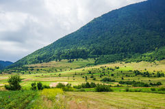 Beautiful summer landscape at the foot of the mountains Stock Photos
