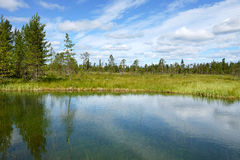 Beautiful summer landscape with forest, lake and swamp Royalty Free Stock Photo