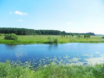 Beautiful summer landscape. Forest, nature, river Stock Photography