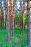 Beautiful summer landscape in forest Stock Photos