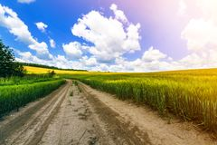 Beautiful summer landscape with fresh green grass, dirt gravel road, blue sky and white puffy clouds. Path through crop fields. Agriculture and harvest concept royalty free stock image