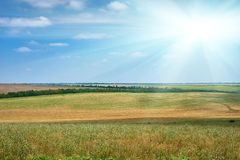 Beautiful summer landscape, green field and bright cloudy sky Royalty Free Stock Photo