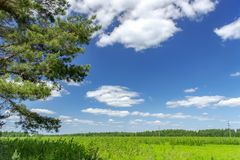 Beautiful summer landscape with green grass and blue sky with white clouds. Background, tree, nature, sun, leaf, spring, agriculture, day, field, horizon royalty free stock photos