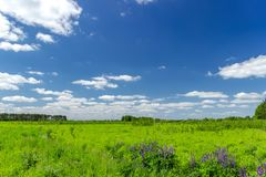 Beautiful summer landscape with green grass and blue sky with white clouds. Background, tree, nature, sun, leaf, spring, agriculture, day, field, horizon royalty free stock images