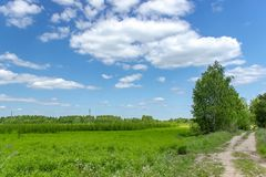 Beautiful summer landscape with green grass and blue sky with white clouds. Background, tree, nature, sun, leaf, spring, agriculture, day, field, horizon royalty free stock photo