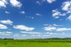 Beautiful summer landscape with green grass and blue sky with white clouds. Background, tree, nature, sun, leaf, spring, agriculture, day, field, horizon stock image