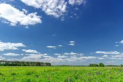 Beautiful summer landscape with green grass and blue sky with white clouds. Beautiful summer landscape with green grass and blue sky with white clouds stock image