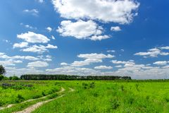 Beautiful summer landscape with green grass and blue sky with white clouds. stock photos
