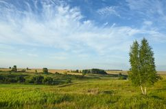 Beautiful summer landscape with green hills,fields and lonely growing birch tree royalty free stock images