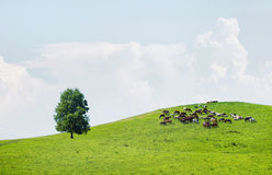 Beautiful summer landscape with green hills and herd of horses Stock Photo