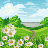 Beautiful summer landscape. Summer landscape with green meadow, flowers, trees, lake and blue cloudy sky Royalty Free Stock Image
