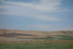 A beautiful summer landscape in idaho. Royalty Free Stock Image