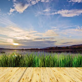 Beautiful summer landscape at the lake Royalty Free Stock Photo