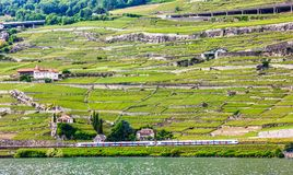 Beautiful Summer landscape of Lake Geneva, Lavaux vineyard terraces and Alps with trains going by, Swiss Riviera, Switzerland Royalty Free Stock Photo