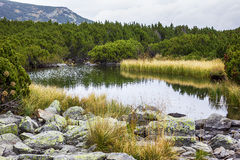 Beautiful summer landscape with lake in Parang mountains Stock Image