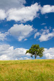 Beautiful summer landscape with a lonely tree Stock Photos