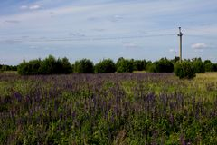 Beautiful summer landscape with a meadow of purple flowers lupins on a background of green grass. Beautiful summer landscape with a meadow of purple lupine royalty free stock images