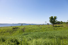 Beautiful summer landscape of meadows with trees. Detached trees on a green hill against the blue sky. Stock Image