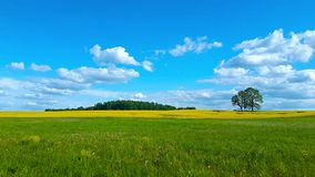 Beautiful summer landscape of meadows stock video