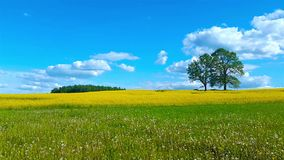 Beautiful summer landscape of meadows stock video footage