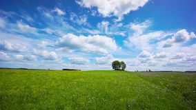 Beautiful summer landscape stock footage