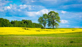Beautiful summer landscape. Of meadows with trees. Lithuania Stock Photography