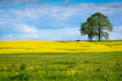 Beautiful summer landscape. Of meadows with trees. Lithuania Royalty Free Stock Image