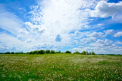 Beautiful summer landscape. Of meadows with trees. Lithuania Stock Photos
