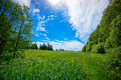 Beautiful summer landscape. Of meadows with trees. Lithuania Royalty Free Stock Photos