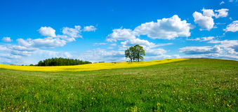 Beautiful summer landscape. Of meadows with trees. Lithuania Stock Image