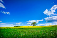 Beautiful summer landscape. Of meadows with trees. Lithuania Royalty Free Stock Photo