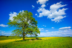 Beautiful summer landscape. Of meadows with trees. Lithuania Stock Photo