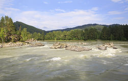 Beautiful summer landscape mountain river Katun. Stock Photos