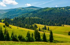 Beautiful summer landscape in mountains. Spruce forest on a grassy hills. lovely nature concept Royalty Free Stock Photography