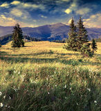 Beautiful summer landscape in the mountains with a feather grass Royalty Free Stock Photos